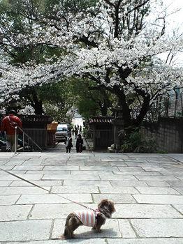 高津神社階段下